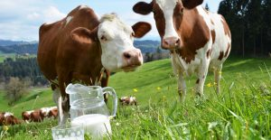 cows-milk-substitutes